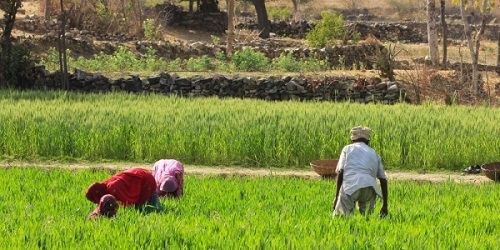 2014 is the Year of Agriculture and Food Security on the continent photo: unep.org