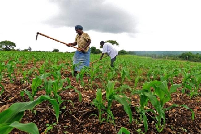 Smallholder farmers in Swaziland