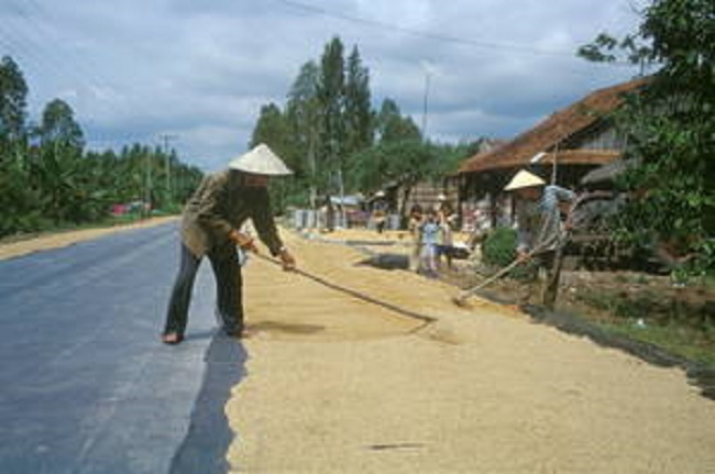 Farmers dry rice on the road to Hon Don in Vietnam