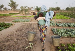 A woman carries water to her crops in Dogondoutchi, Niger. Photo:  FAO/Giulio Napolitano