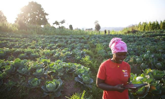Youth opportunities within the agricultural sector