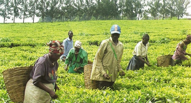 Ugandan farmers at work Photo: agencyft.org